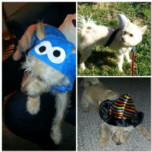 The pup dressed up as Cookie Monster, a shark pup, and wore a witches hat for a moment before she tried to eat it.
